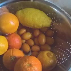 Sélection des fruits !