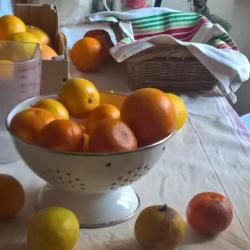 Pesée des fruits !