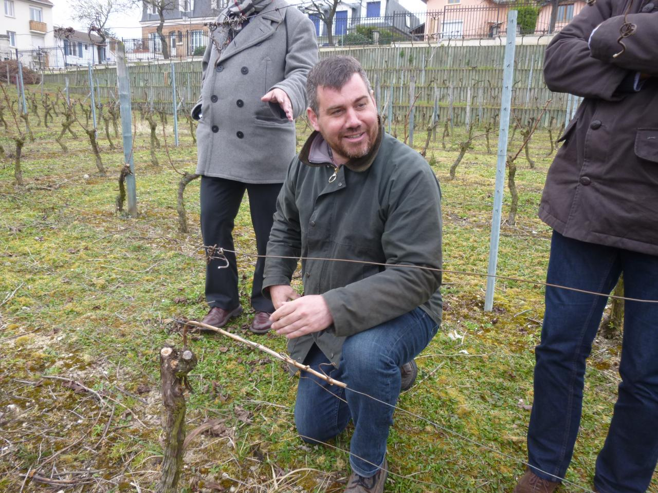Guillaume, vigneron