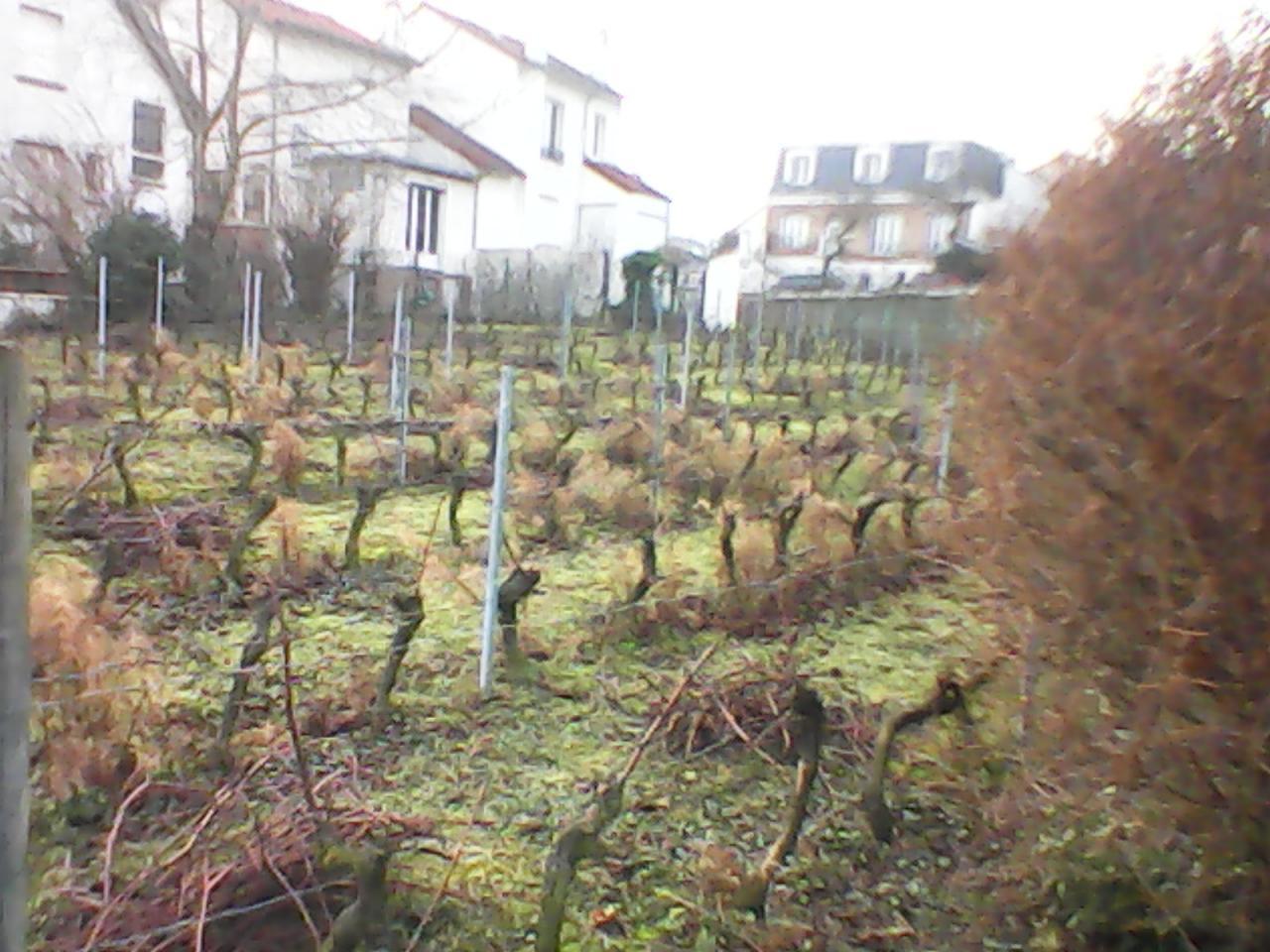 Coteaux de la vigne de Suresnes