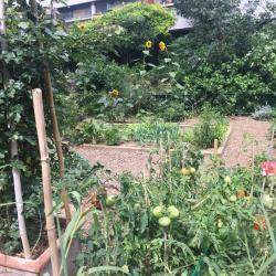 Le 15eme regorge de jardins partagés !