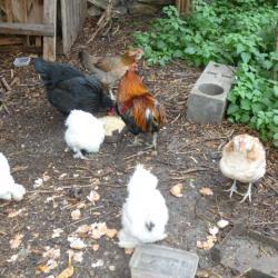 Les amies du jardin !