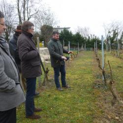 promenade dans la vigne de Suresnes