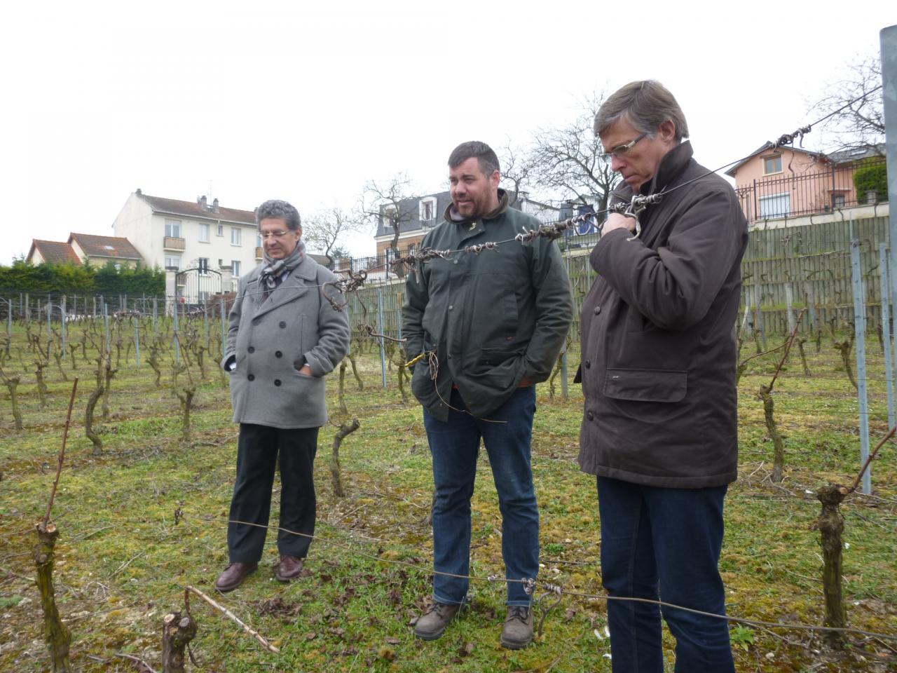 Balade dans la vigne de Suresnes