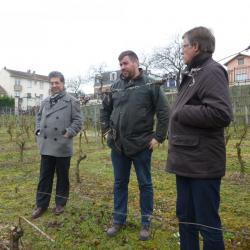 Balade dans un vigne en région parisienne