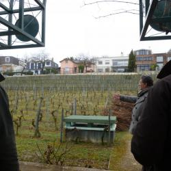 Photo de la vigne de Suresnes
