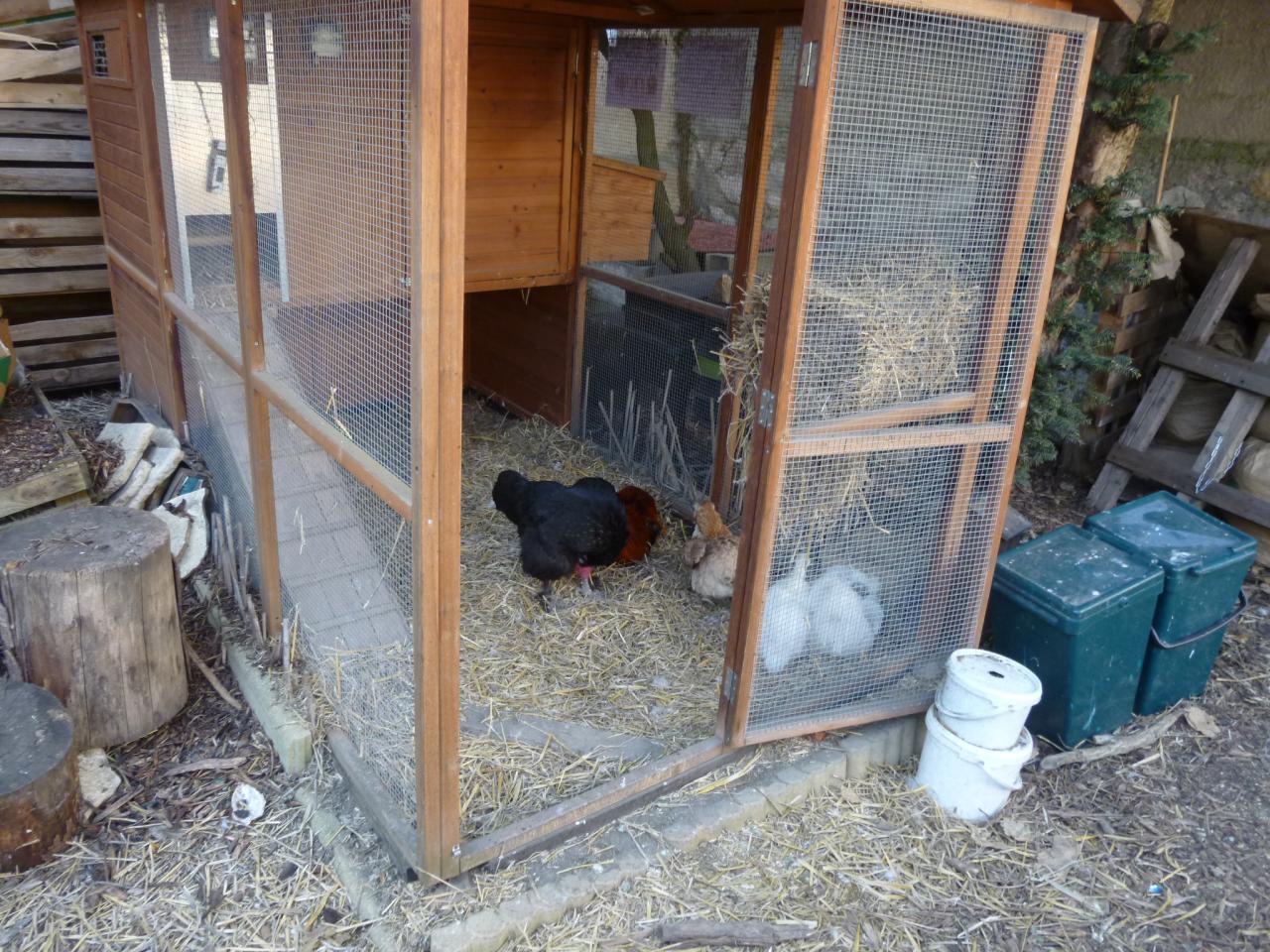 Les poules !
