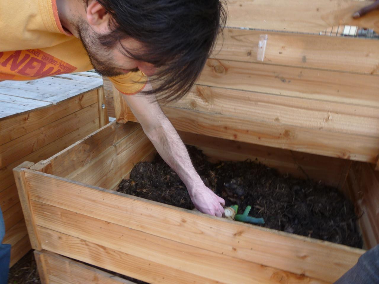 Un curieux met la mqin dans le compost'