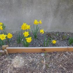 Quelles belles fleurs jaunes...