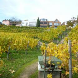 La vigne de Suresnes en automne