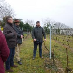 Rencontre vigne de Suresnes