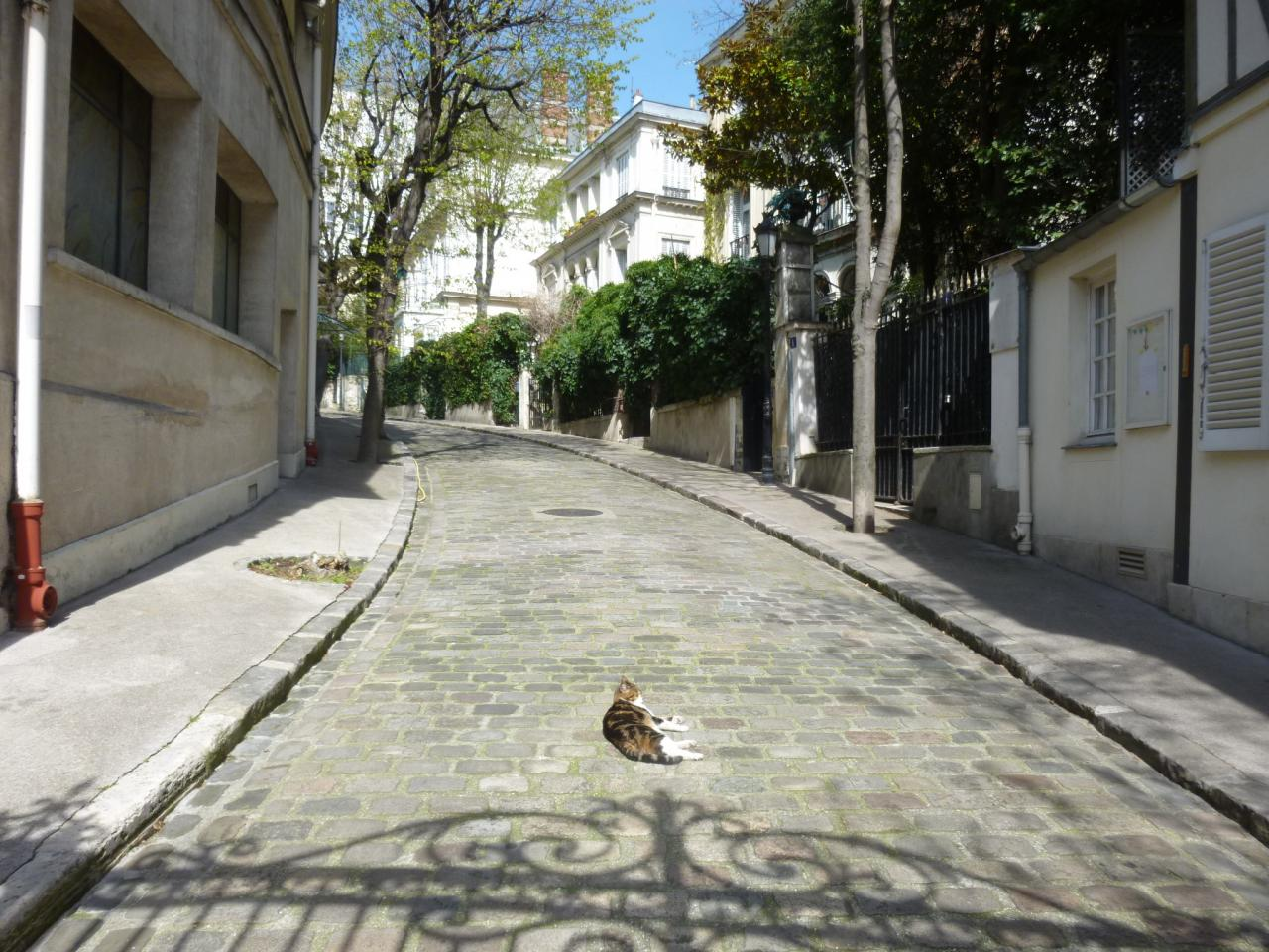 Attention au chat en traversant la rue !